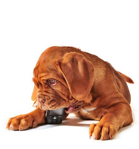 Ifixit Repairs Pup